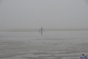 Spaziergang mit Hund im Nebel