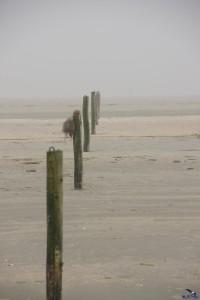 Holzpfähle im Nebel