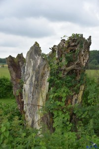 Natürliche Skulptur