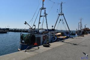 Fischkutter in Maasholm