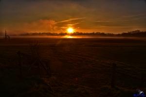 Sonnenaufgang im Lindauer Noor mit Nebelschwaden