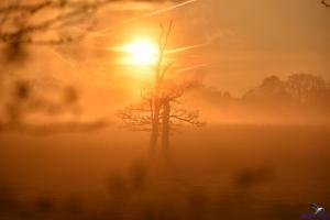 Sonnenaufgang am Lindauer Noor