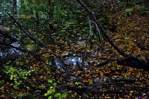 Tümpel im Königswald