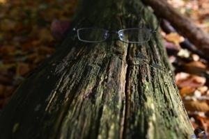 Baum mit Durchblick