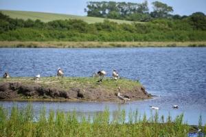 Vogelparadies in Birk