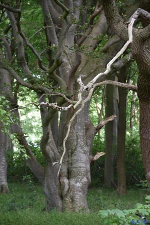 Urige Bäume