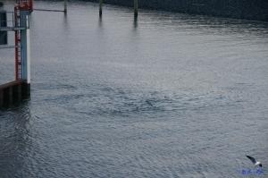 Strudel in der Elbe
